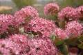 agriturismo-bevagna-fiori