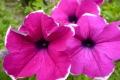 agriturismo-bevagna-fiori-2